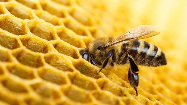 Racun pada sengatan lebah memiliki manfaat untuk kecantikan kulit. Foto: Valengilda (Getty)